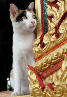 Cat at Chalong Temple