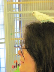 A bird on the head...