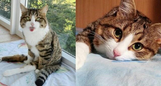 Gambar Kucing Ngeselin godean.web.id