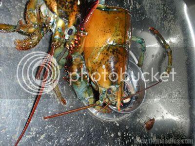Lobster head