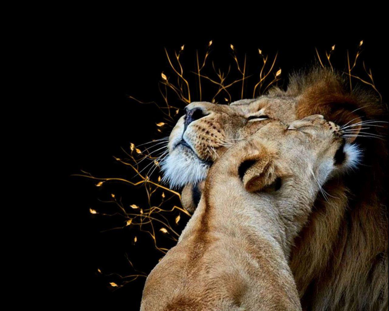 Fond Décran Lion Multicolore