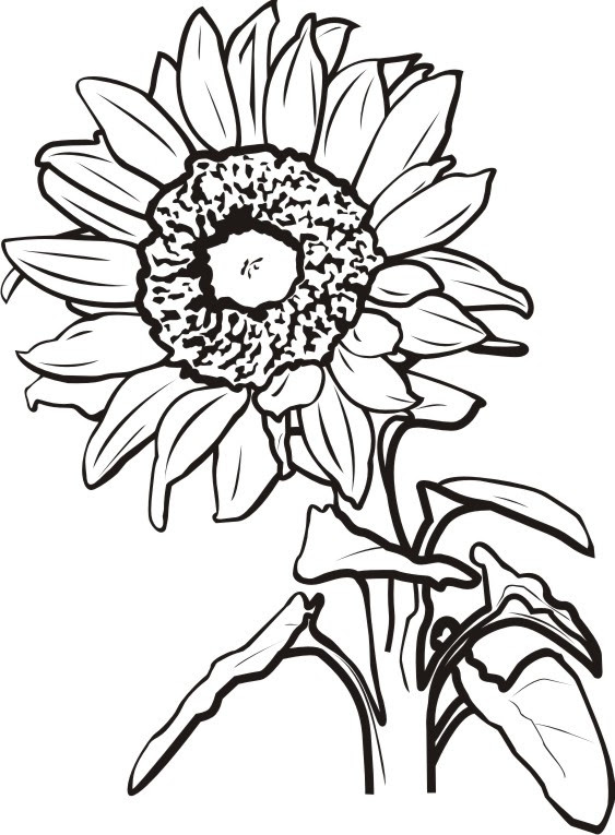 Sunflower Black And White Drawing At Getdrawingscom Free For