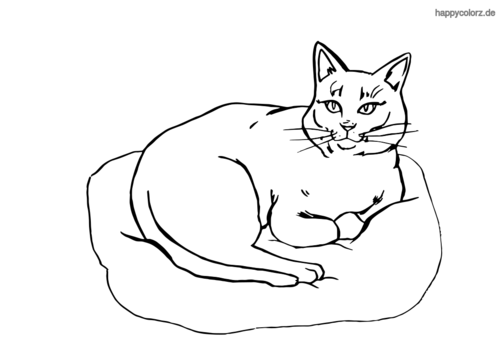 katzenbilder zum ausmalen  malvorlagen gratis