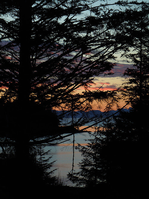 sunrise through trees, Kasaan, Alaska