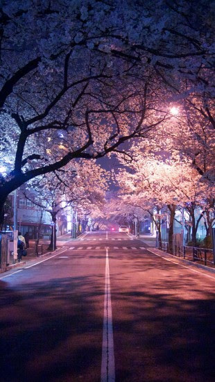 tokyo cherry blossom - The iPhone Wallpapers