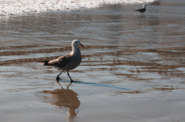 Seagulls and hope