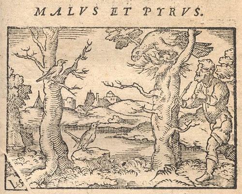 Accipiter, Luscinia et Auceps - Osius