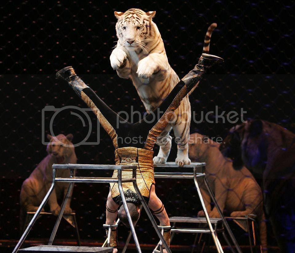 Shrine Circus Tigers