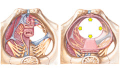 Bladder Control | Urinary Incontinence - Dribbling ...
