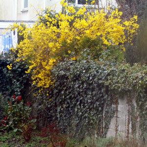 A bush in flowers.