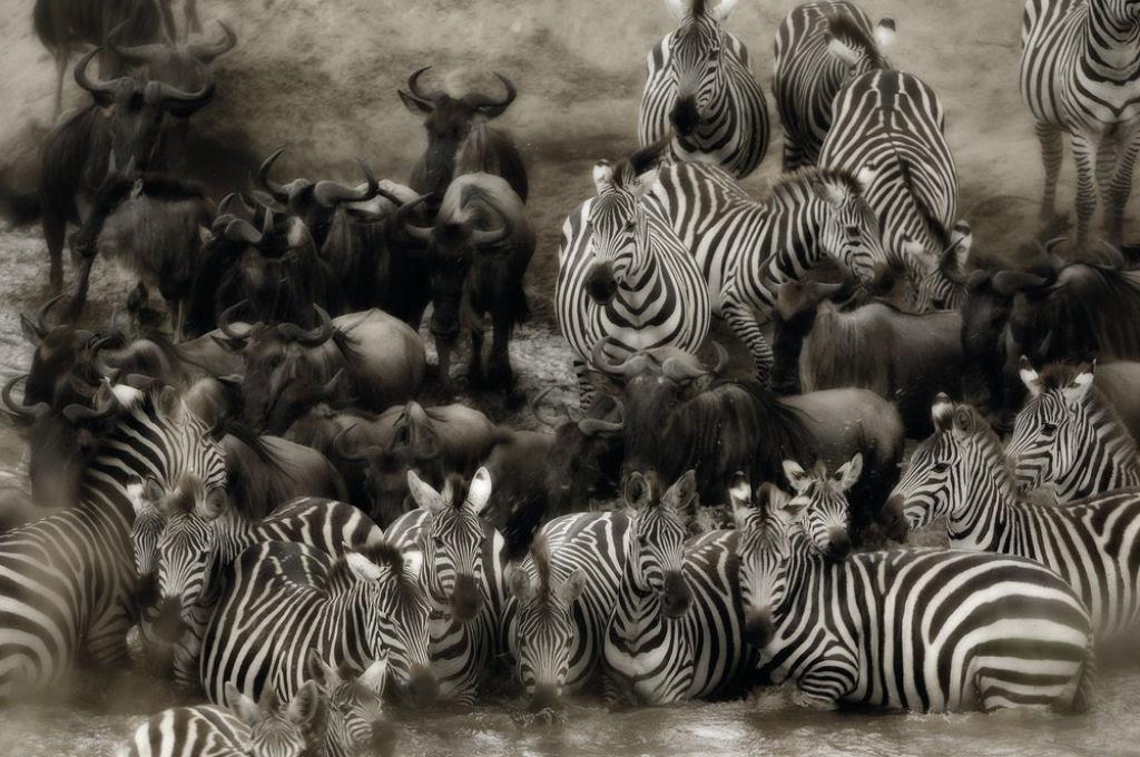 O lado colorido da África selvagem por Alex Bernasconi 05