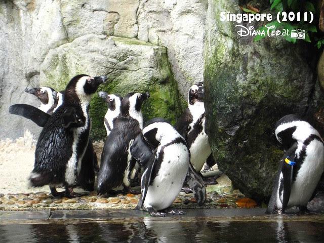 Day 3 Singapore - Zoo Singapore 15