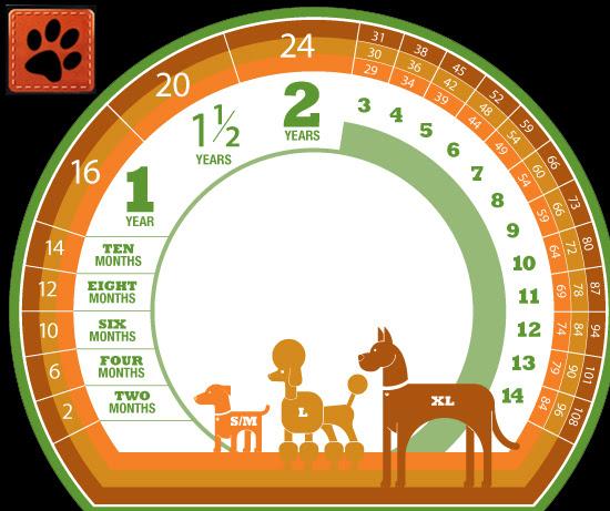 Tabela de comparação de idade canina com idade humana