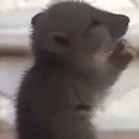 Chó, Chuột, Và Chim Cũng Biết Lễ Phật