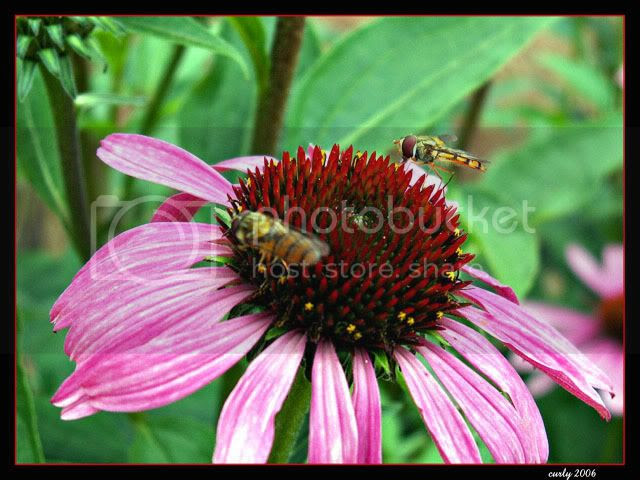 picture of bees and a flower