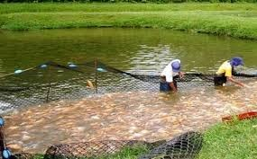 Producci n de especies menores producci n pisc cola for Jaulas flotantes para piscicultura
