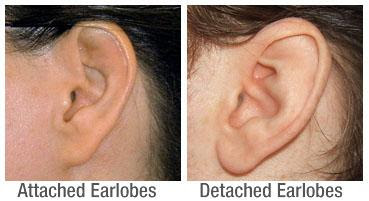 Image result for attached earlobes race