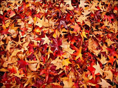Unduh 63 Wallpaper Dedaunan Cantik Gambar HD Gratid