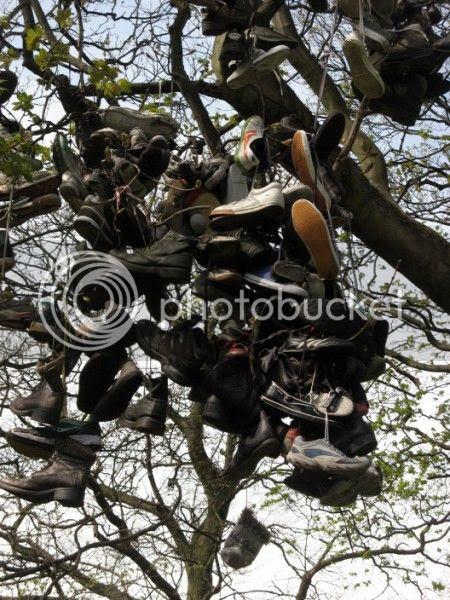 Photo - Heaton Shoe Tree