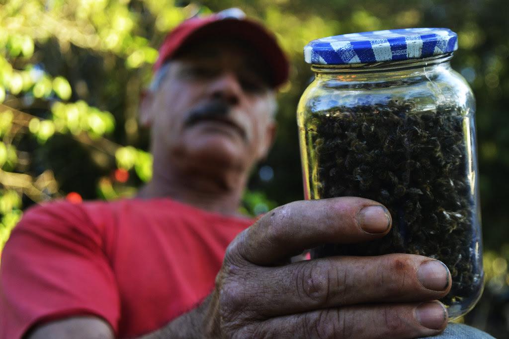 Matéria I - Seu João Machado perdeu todas as colmeias em poucas horas, após perceber que vizinhos passavam veneno nas lavouras.jpg