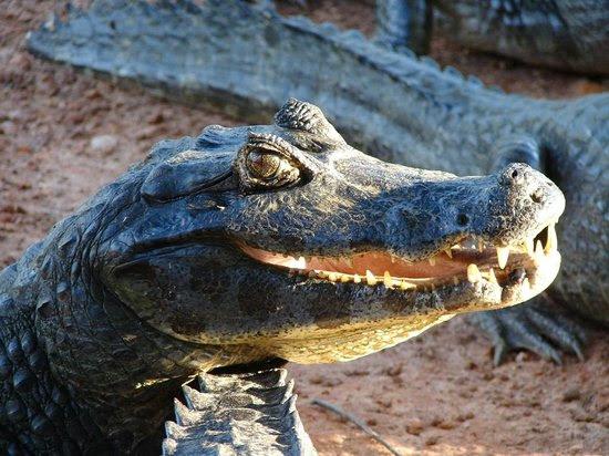 Photos of Pantanal Wetlands, Campo Grande