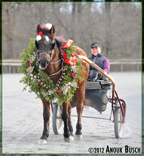 Jingle bells, jingle bells, jingle all the way... Oh what fun it is to ride in a one-horse open... jog cart!