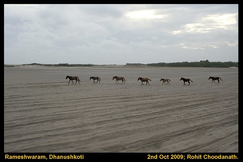 7 horses from nowhere in Dhanuskoti