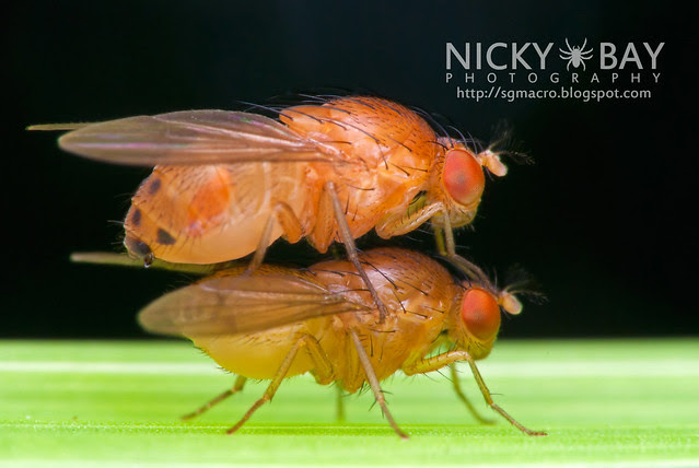Fruit Flies? - DSC_3549