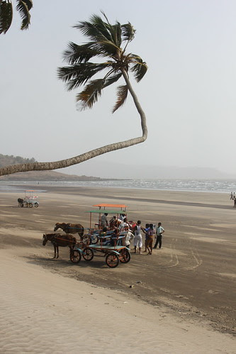 The Whistling Palms Murud Beach by firoze shakir photographerno1