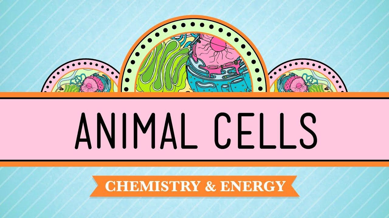 Eukaryopolis - The City of Animal Cells: Crash Course ...