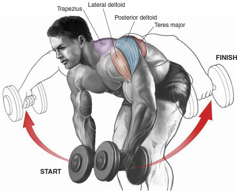 bent-over-dumbbell-raise