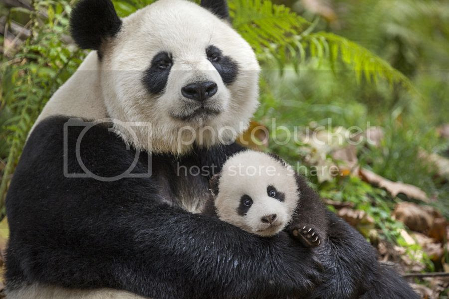 Born In China Disney Nature