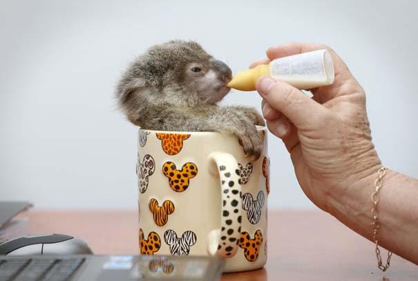 Οι 50 καλύτερες φωτογραφίες ζώων του 2012 (21)