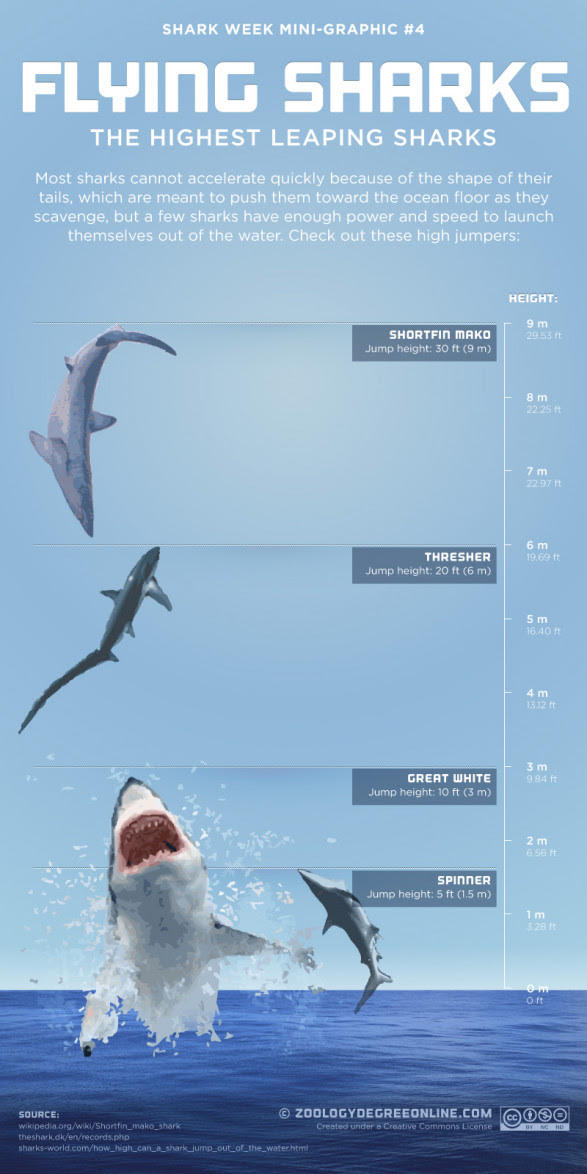 Flying Sharks - The Highest Leaping Sharks