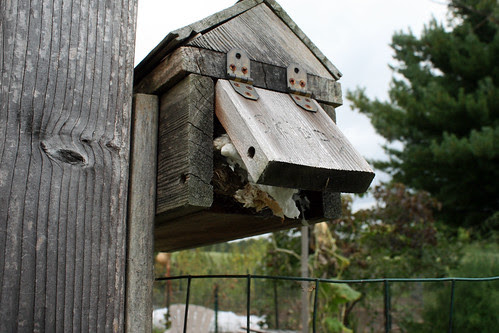 mouse in the mailbox 111