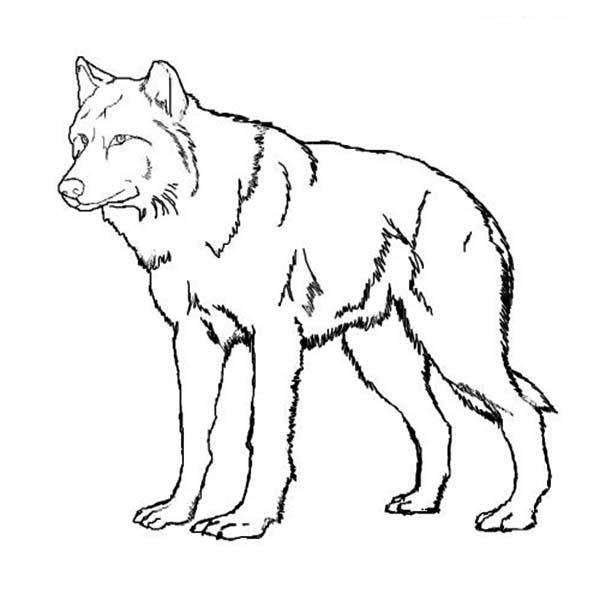 Amazing Wolf Coloring Page - Download & Print Online ...