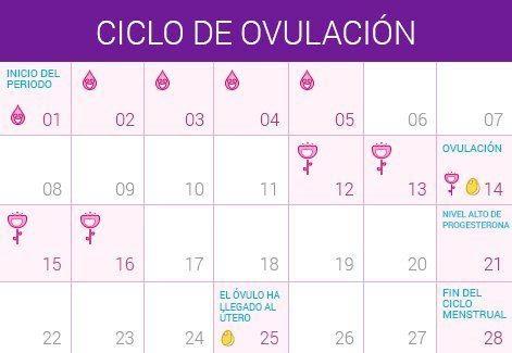 Calendario De Mis Dias Fertiles.Aparato Para Saber Dias Fertiles