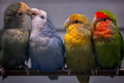 simply-beautiful-world:   BIRDS OF A DIFFERENT FEATHER FLOCK TOGETHER. WHY IS THIS SO HARD FOR HUMANS?