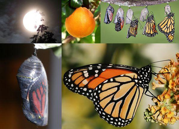 http://a54.idata.over-blog.com/600x432/3/41/83/38/01-Mobilier/07-Cabane-a-palettes/01-de-la-chrysalide-au-papillon-LT.jpg