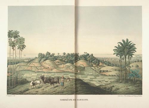 Java seine Gestalt, Pflanzendecke und innere Bauart 1857 (Junghuhn)
