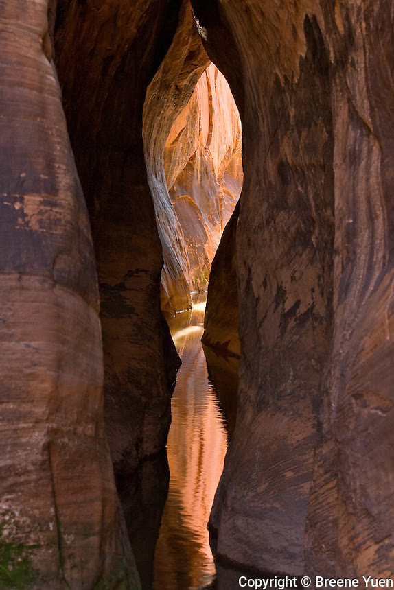 Tunnel slot canyon escalante