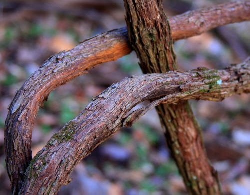 tree.hugger