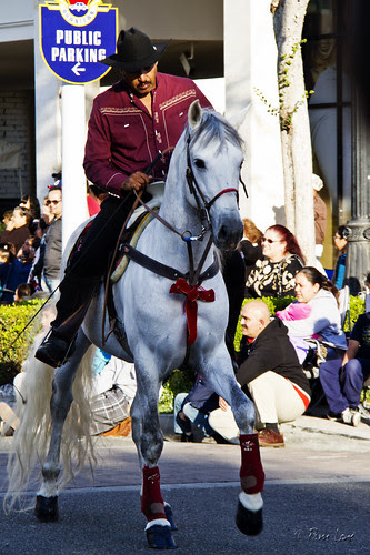 Downey Christmas Parade horse rider