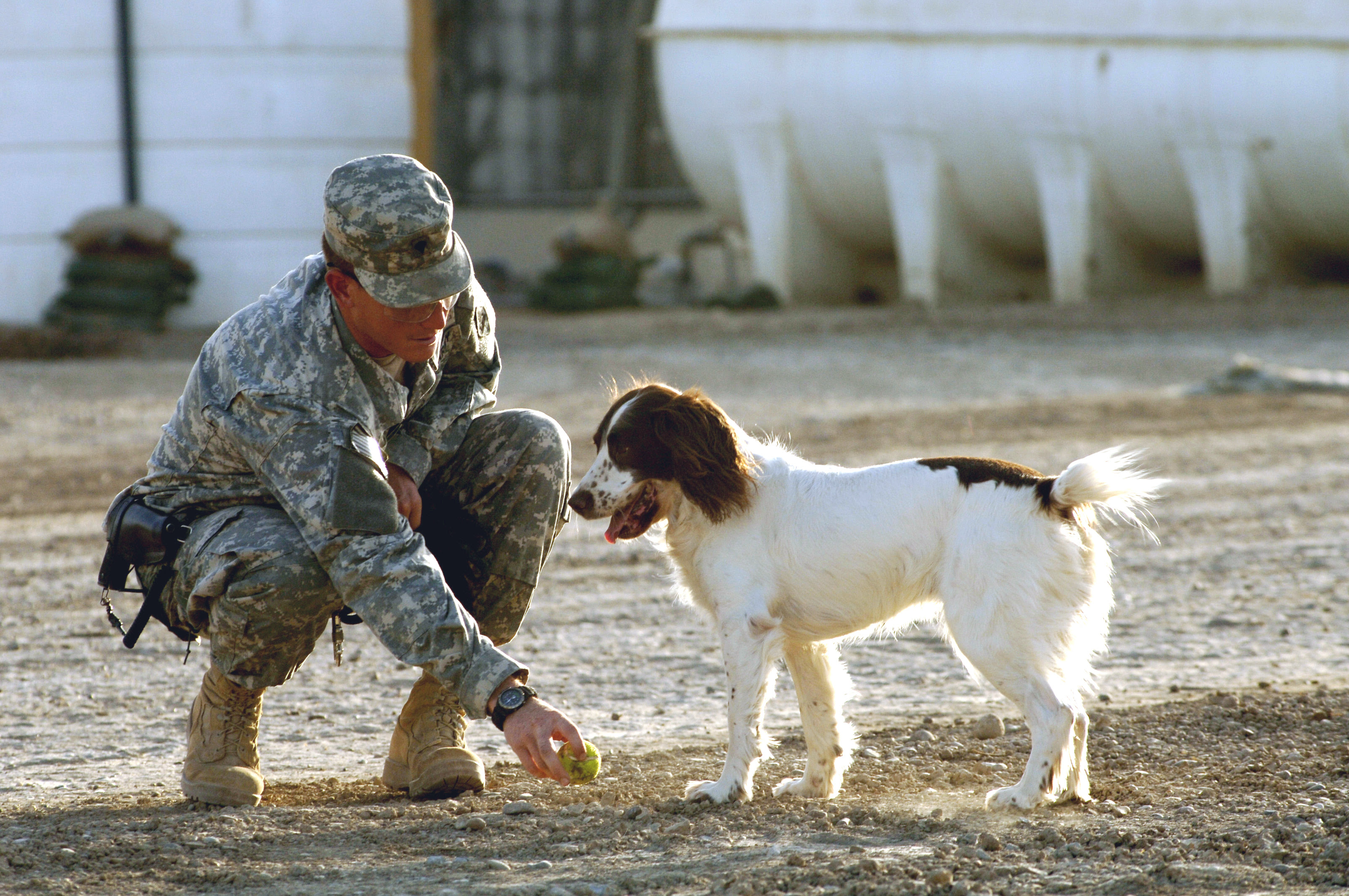 http://roxanaiordache.files.wordpress.com/2011/05/military-dog-defense-gov.jpg