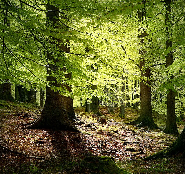 File:Grib skov.jpg
