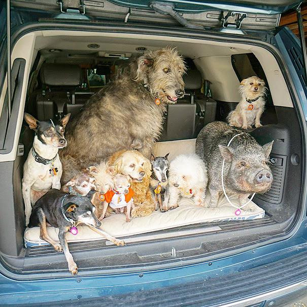 man-adopts-senior-dogs-shelter-steve-greig-132