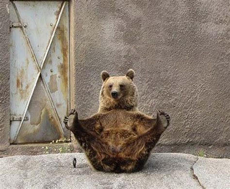 Funny Brown Bears New Photos/Pictures 2012   Funny Images Show