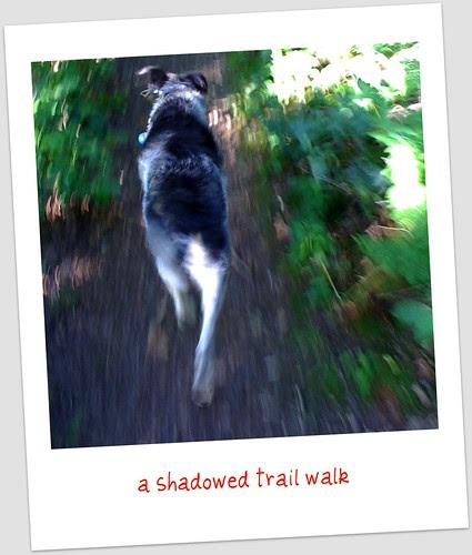 shadow walk begins