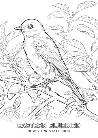41+ Bird Coloring Book For Adults Picture HD