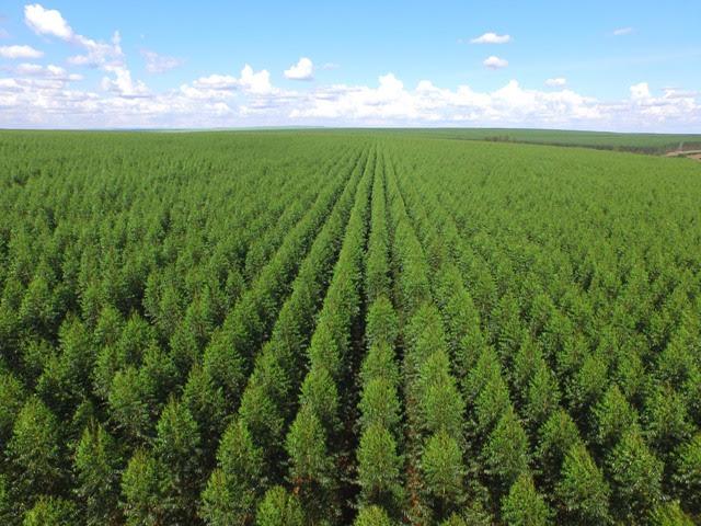 Solos bem nutridos e corrigidos resultam em florestas mais saudáveis - Créditos Shutterstock